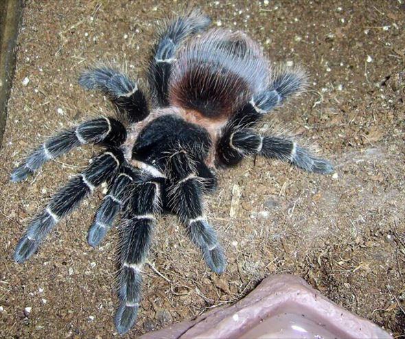 蜘蛛画像 54.0