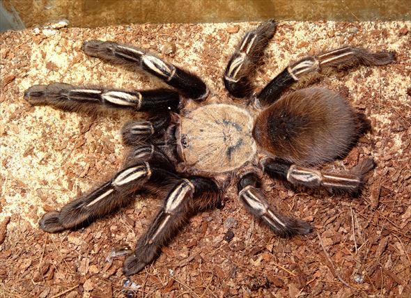 蜘蛛画像 57.0