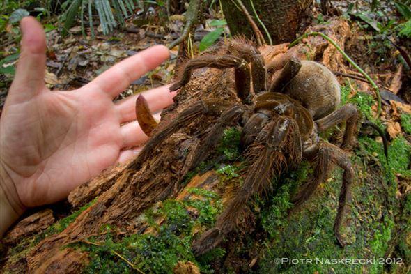 蜘蛛画像 60.0