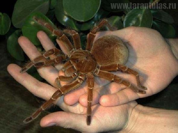 蜘蛛画像 60.1