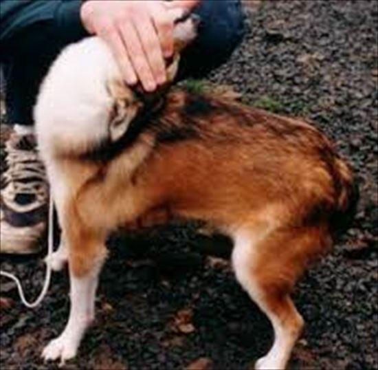 イヌの雑学 13.1