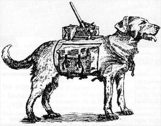 イヌの雑学 14.0