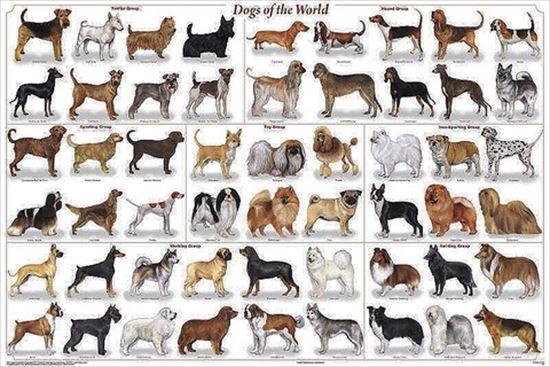 イヌの雑学 26.0
