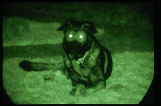 イヌの雑学 3.0