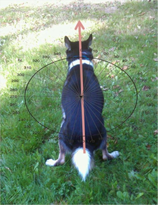 イヌの雑学 38