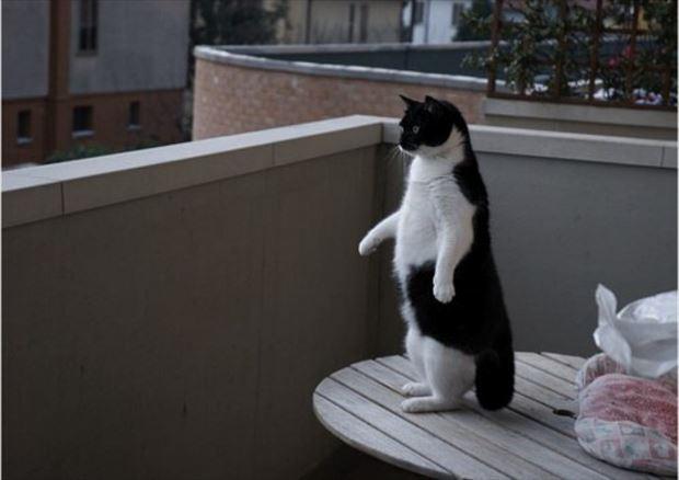 猫画像 10