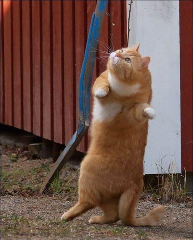 猫画像 12