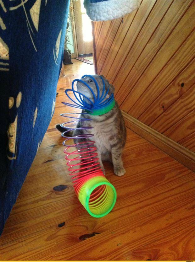 猫画像 2