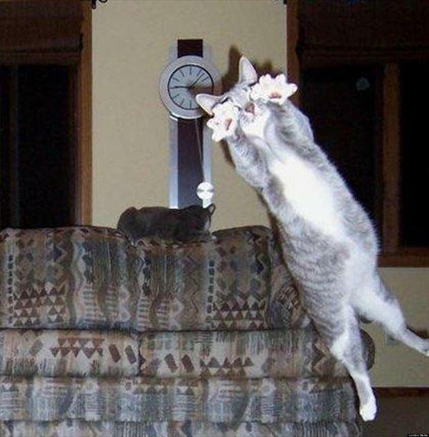 猫画像 7