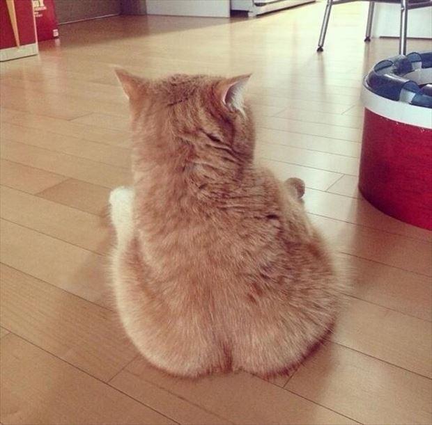 猫画像 8