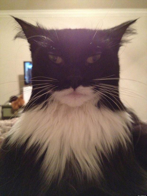 猫画像 9