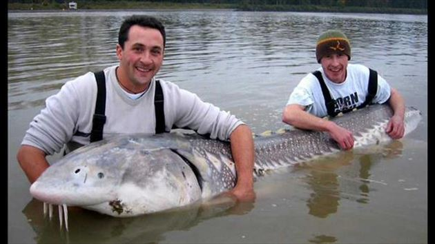 巨大魚 1.1