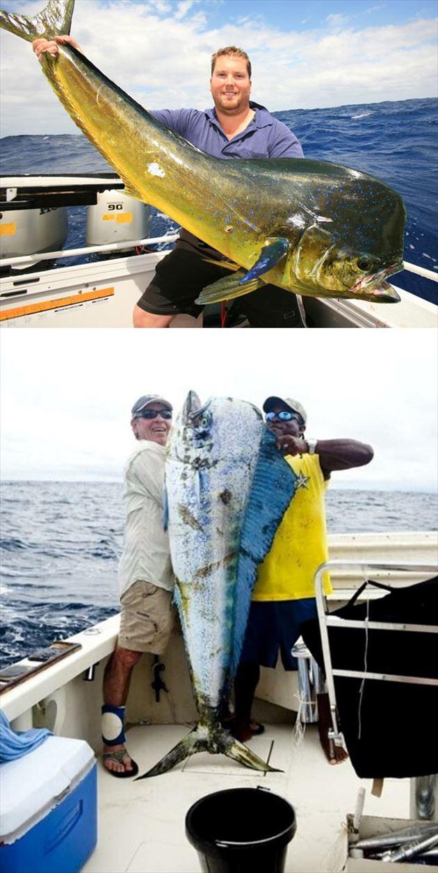 巨大魚 10