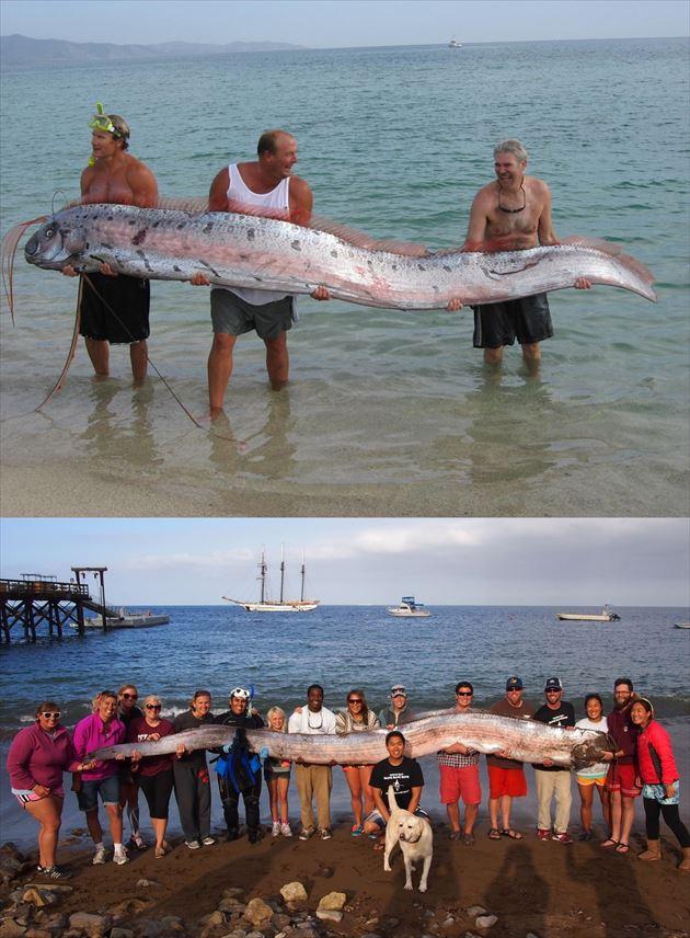 巨大魚 15.0