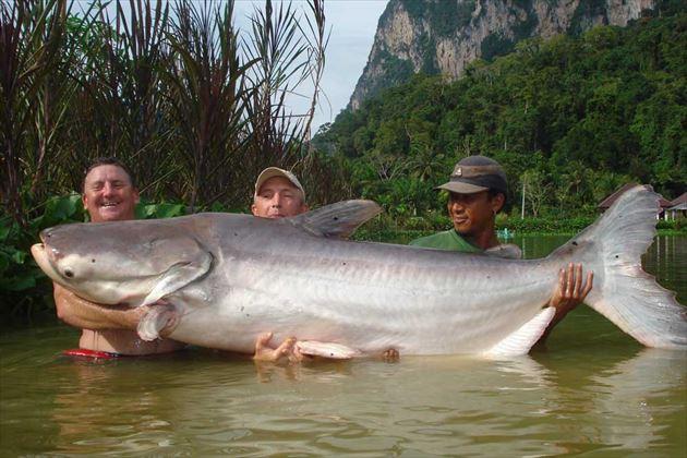 巨大魚 16.0