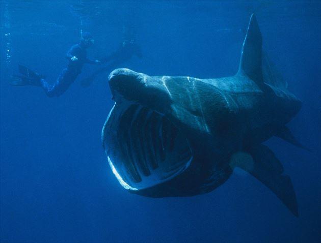 巨大魚 22.0