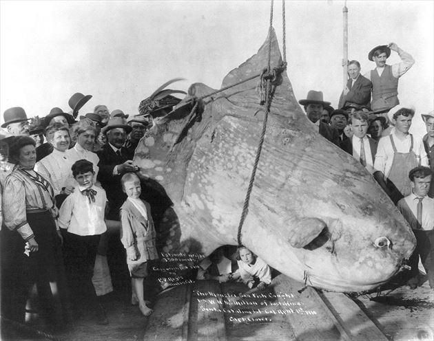 巨大魚 25