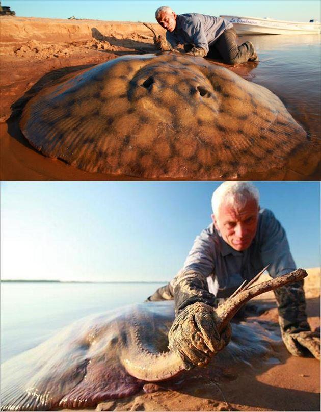 巨大魚 28