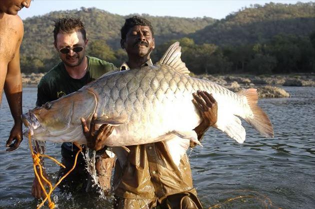 巨大魚 29
