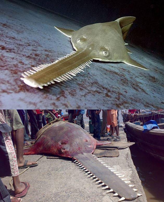巨大魚 32.0