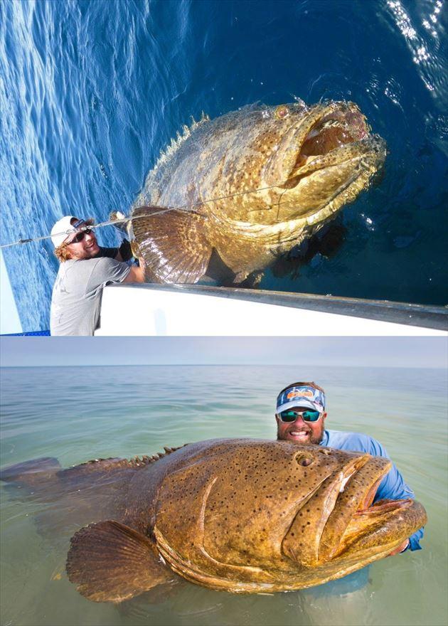 巨大魚 35.0