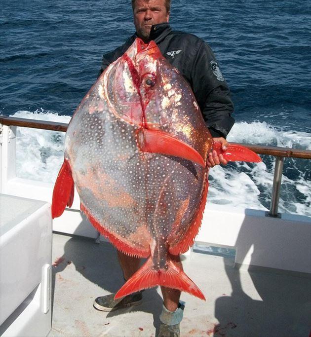巨大魚 36.0