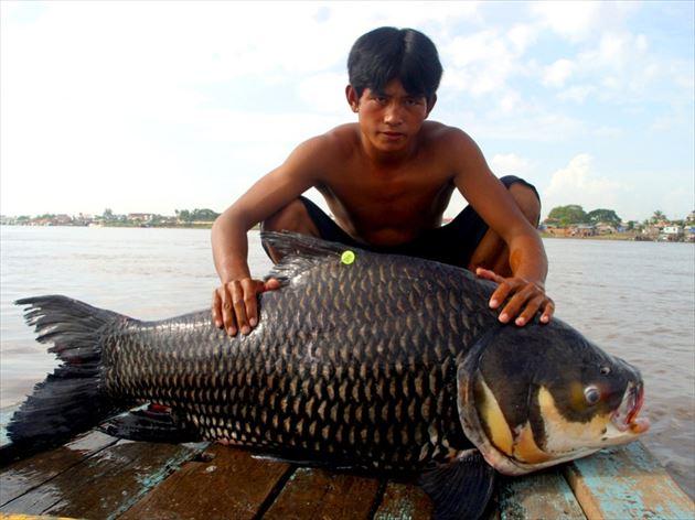巨大魚 4.0