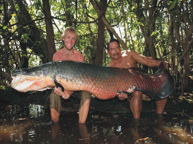 巨大魚 6