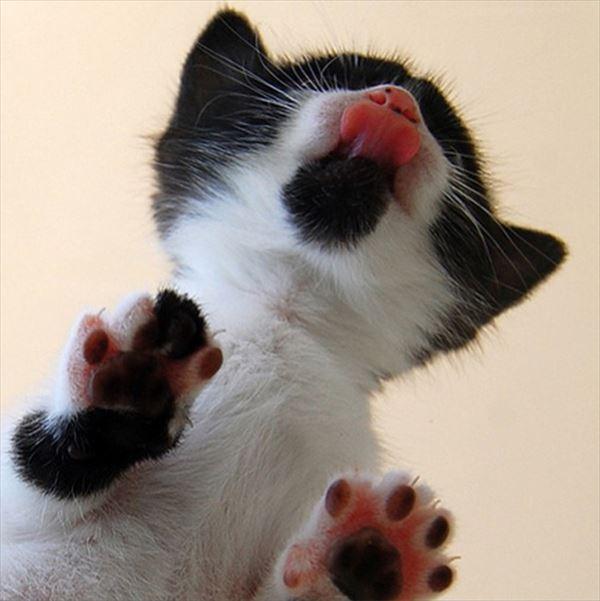 猫の肉球1 19
