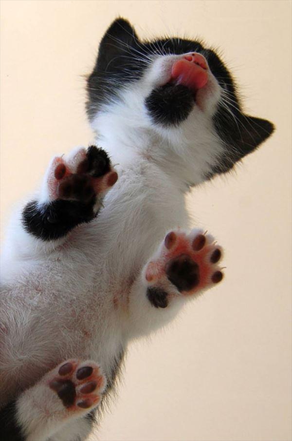 猫の肉球1 26