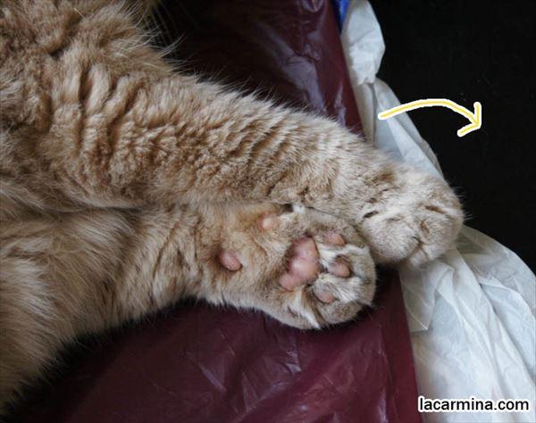 猫の肉球1 35
