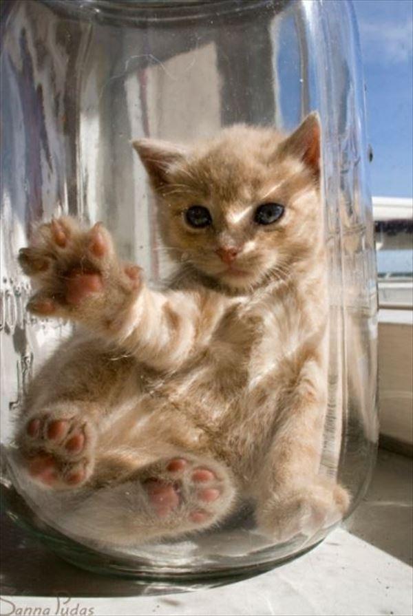 猫の肉球1 65
