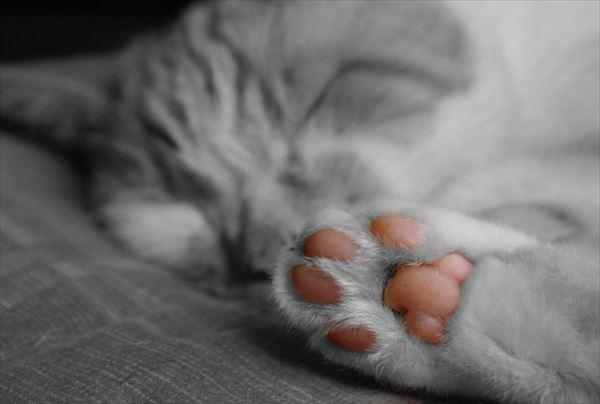 猫の肉球1 68