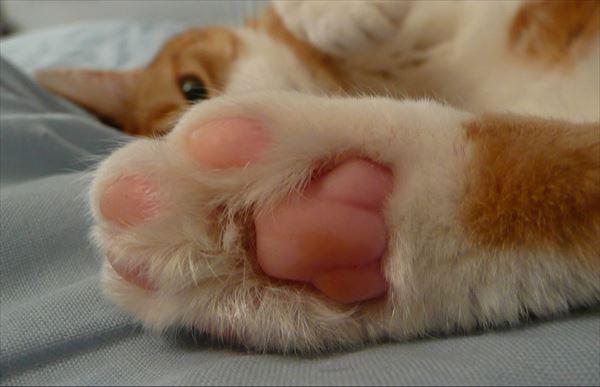 猫の肉球1 75