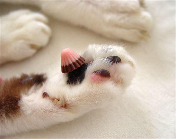 猫の肉球1 85