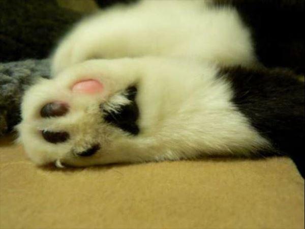猫の肉球2 92