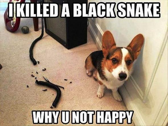 おもしろ犬画像 1