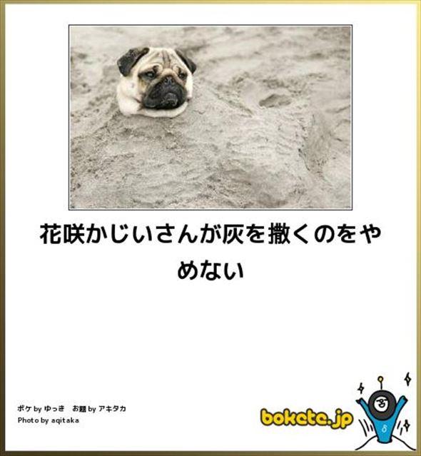 おもしろ犬画像 100