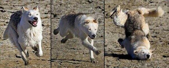 おもしろ犬画像 101