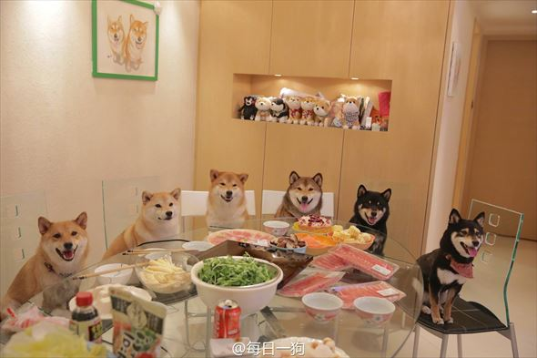 おもしろ犬画像 12