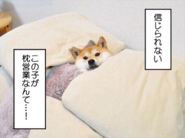 おもしろ犬画像 14