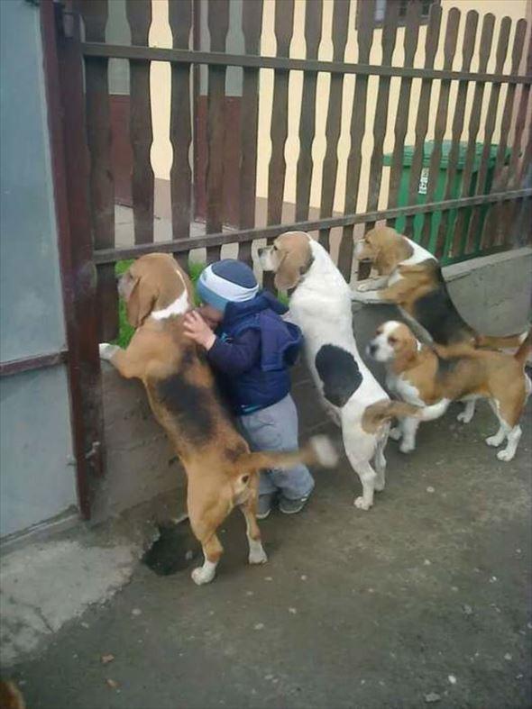おもしろ犬画像 18