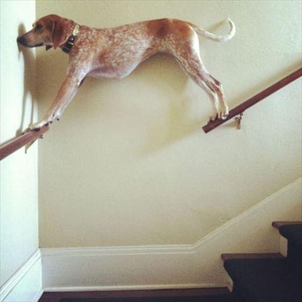 おもしろ犬画像 2