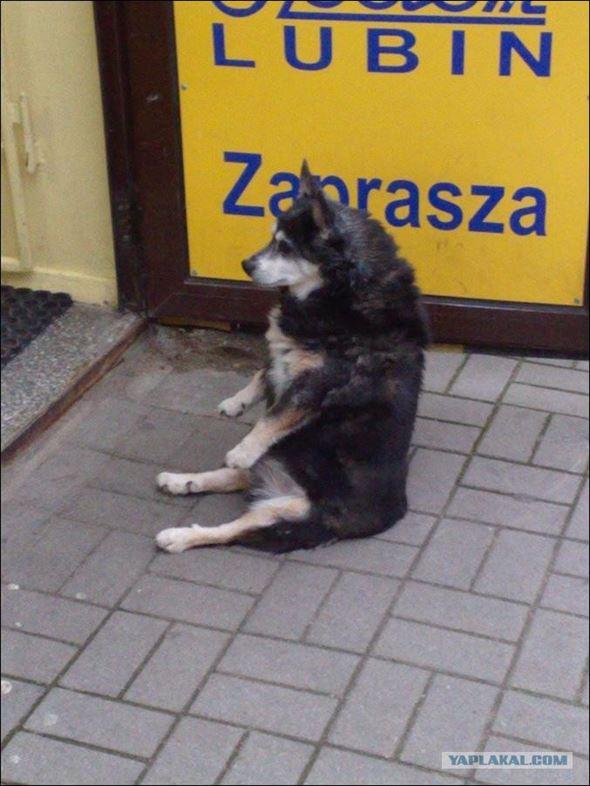 おもしろ犬画像 24