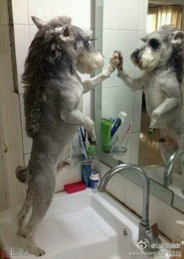おもしろ犬画像 27