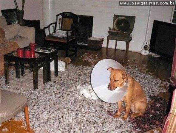 おもしろ犬画像 36