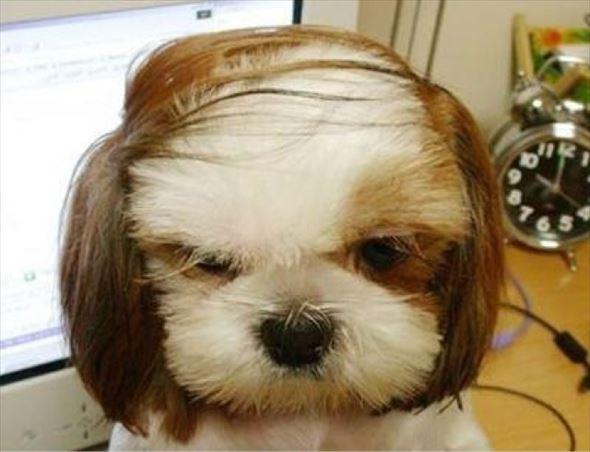 おもしろ犬画像 39