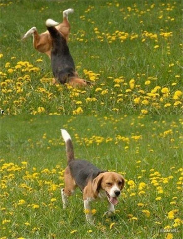 おもしろ犬画像 40