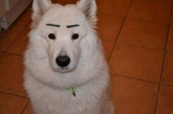 おもしろ犬画像 42