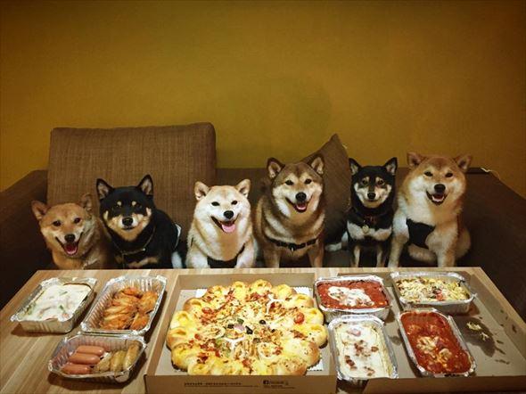 おもしろ犬画像 48